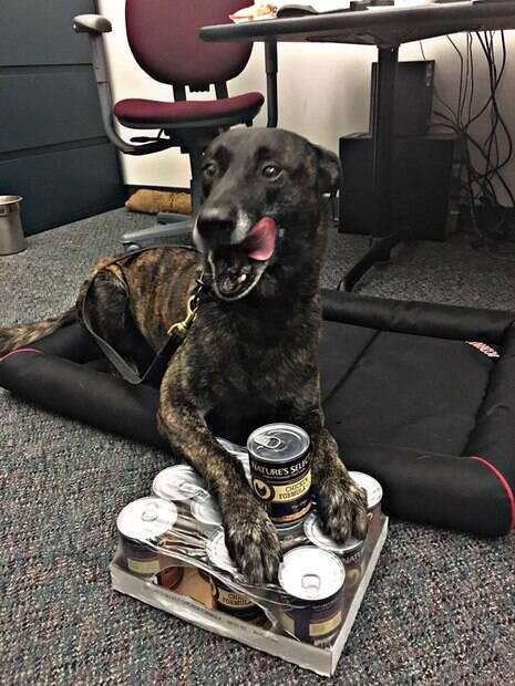 Cão policial perdeu quase todos os dentes após capturar fugitivo