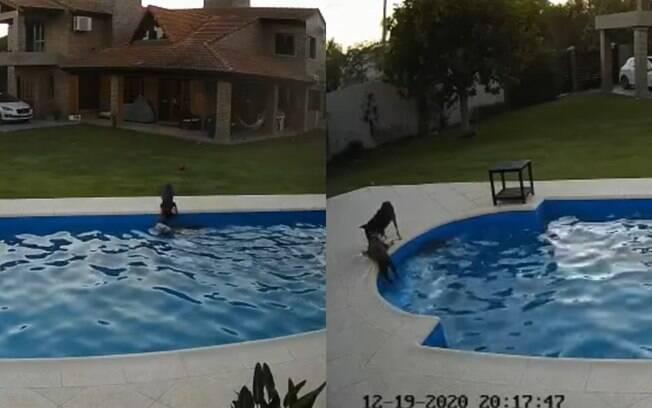 Caipirinha salva a irmã Luna que caiu na piscina