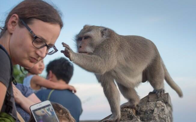 Macacos são treinados para roubar e vender objetos na Tailândia
