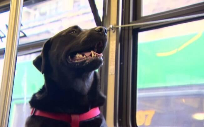 Cadela pega ônibus sozinha para ir ao parque