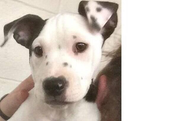 A filhote de cachorro Lucy possui uma peculiaridade em suas orelha que espantou a todos.