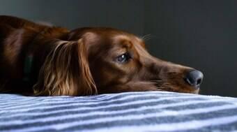 Descubra como denunciar maus-tratos contra animais