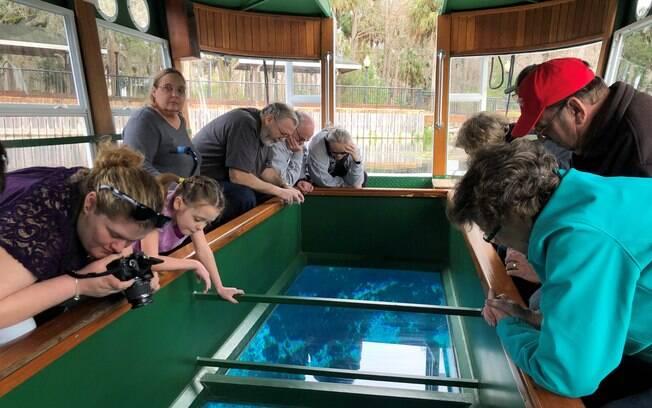 Um dos passeios indicados para fazer em Ocala, na Flórida, é em um barco que possui o chão de vidro para ver os animais