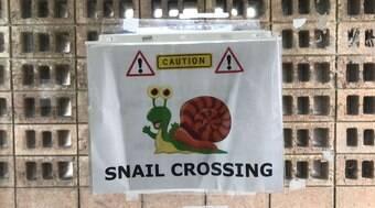 Mulher instala placa de aviso para manter caracóis seguros