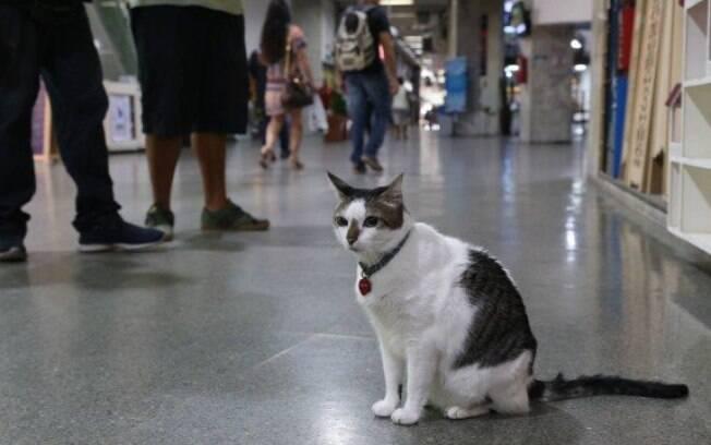 Gato Rubinho poderá frequentar galeria no Rio de Janeiro