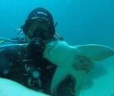 """Homem tem amizade com tubarão: """"Trato como se fosse um cão"""""""