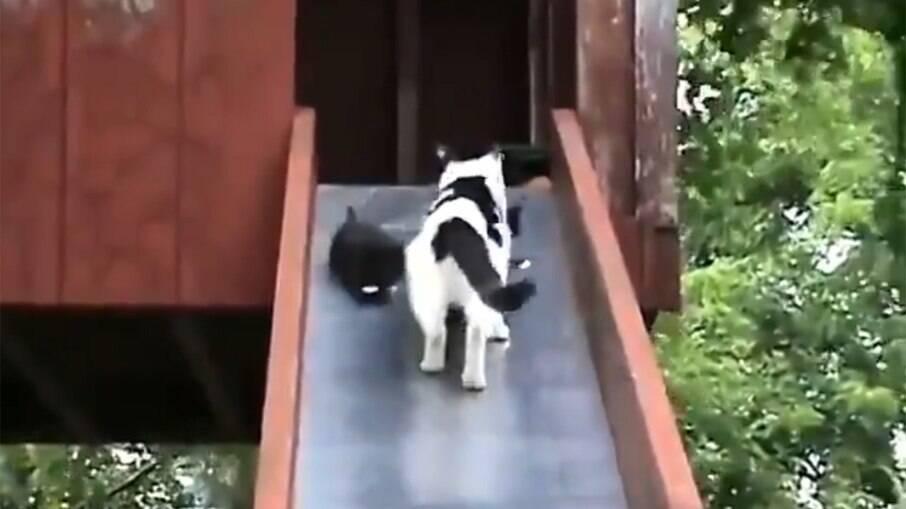 Gatinhos brincam no escorregador