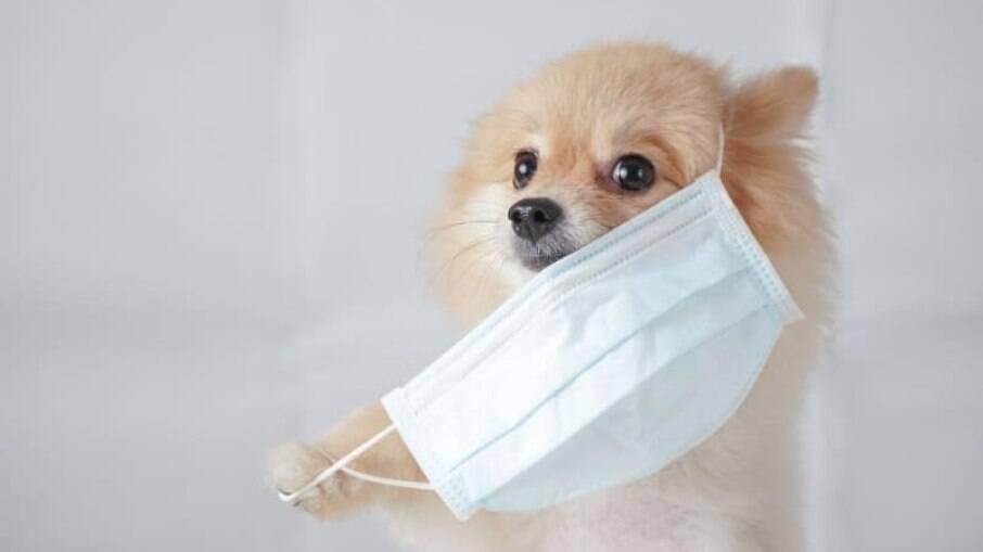 O que você precisa saber sobre cachorros e o coronavírus