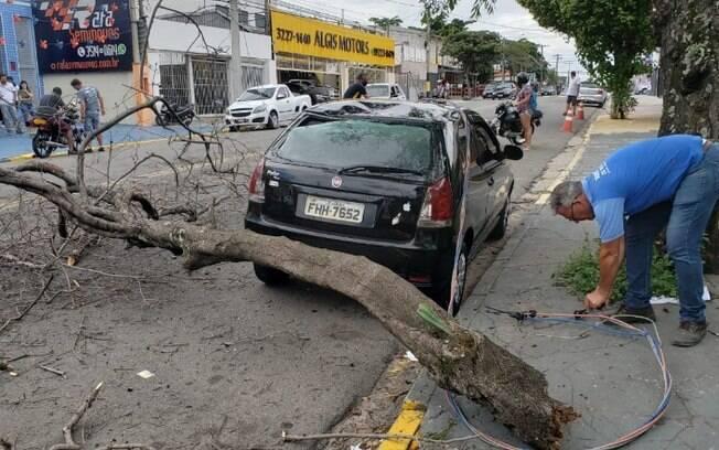 Árvore cai e acerta homem e carro no Campos Elíseos, em Campinas