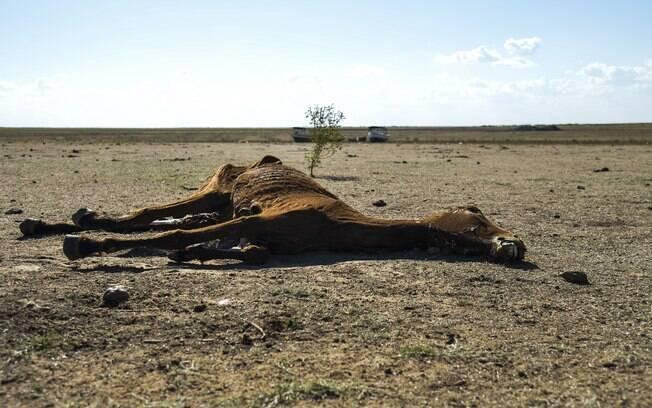 Recursos do governo federal deveriam ter sido destinados ao atendimento de vítimas da seca no Maranhão