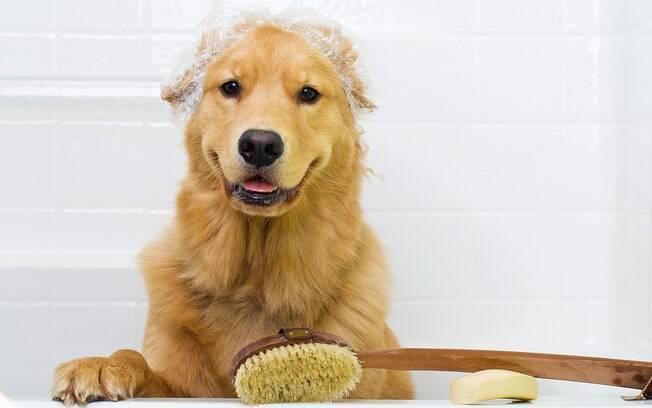 Nem todos os donos tem tempos de dar banho no cachorro em casa, por isso precisam recorrer aos serviços de pet shops