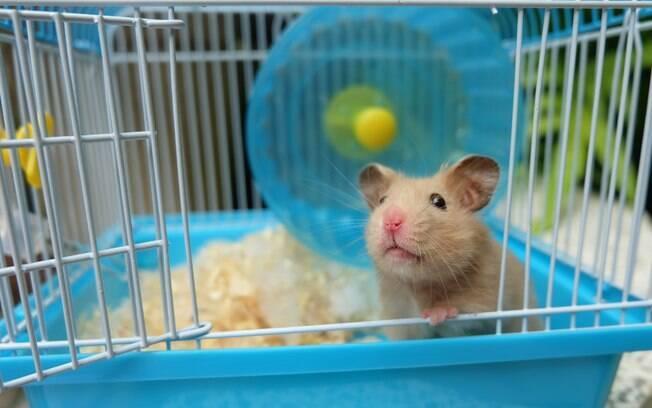 A gaiola do hamster deve ser limpa por completo a cada cinco dias