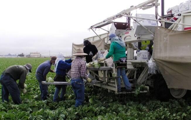 """""""A previsão da safra recorde este ano é positiva para a questão das substituições de equipamentos agrícolas. Esperamos boa produtividade nessa safra e nas demais"""", disse Antonio Megale sobre a venda das máquinas agrícolas"""