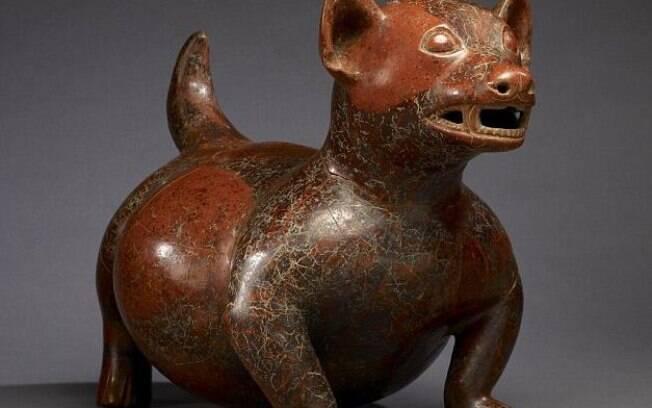 Pesquisa expôs que cães eram um pouco maiores do que os chihuahuas, e viviam mais tempo por se alimentarem melhor
