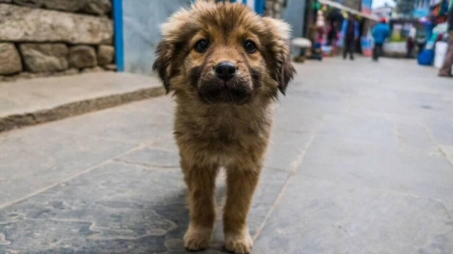 Cães que vivem na rua precisam lutar diariamente