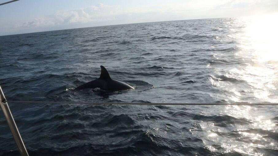 Baleias atacam iate perto do estreito de Gibraltar