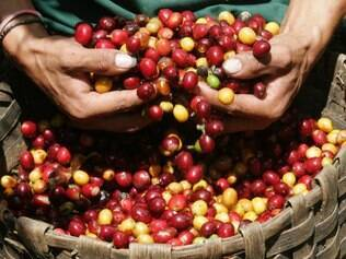 Os contratos já firmados financiarão operações de custeio, estocagem e aquisição do café