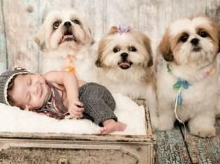 Fotógrafa conta que é comum os cães demonstrarem receio de se aproximar do bebê