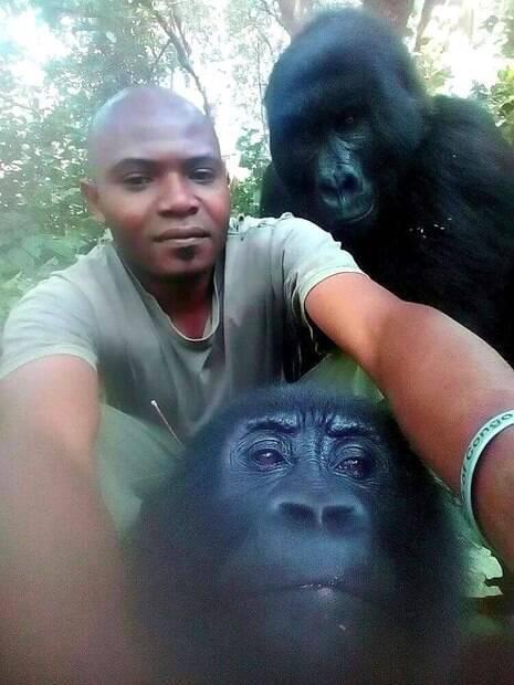 gorilas posam para selfie
