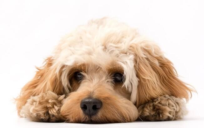SPC Brasil aponta que 73% dos consumidores  já tiveram gastos imprevistos com os pets, principalmente com doenças