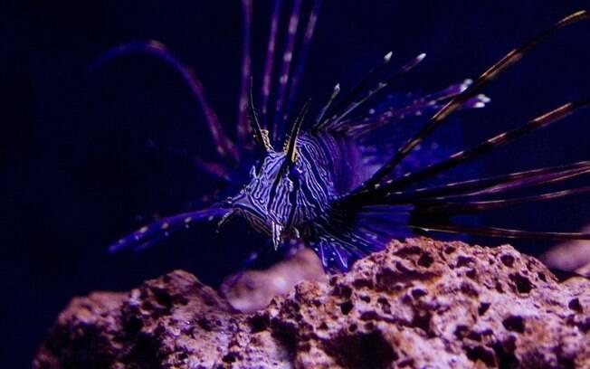Os seres do mar podem ser vistos de pertinho nos aquários do Brasil