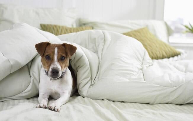 Em casa com pets, tecidos de sofás devem ser impermeabilizados e fáceis de limpar