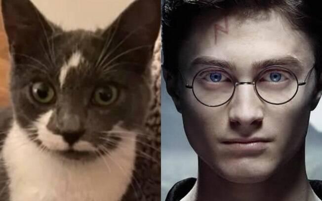 Gato Potter
