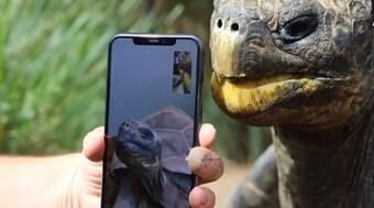 Parque australiano apresenta por aplicativo tartarugas em extinção