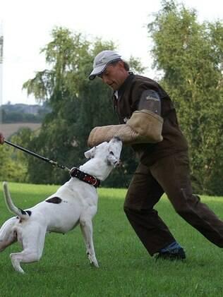 Todo cão de guarda precisa receber treinamento