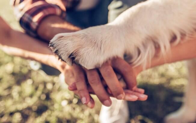 A decisão de quem fica com o animal de estimação após o divórcio pode ser tomada de forma consensual ou litigiosa