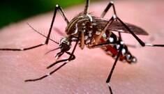 Epidemia de zika na Colômbia chega ao fim, dizem autoridades