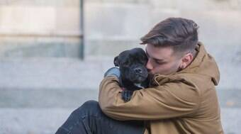 Seu cão pode não te amar tanto quanto você imaginava
