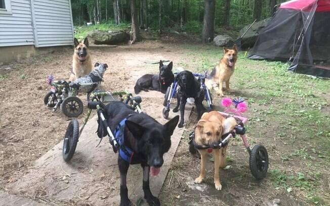 Tracey possui oito cães no total, sendo seis deles portadores de deficiências físicas