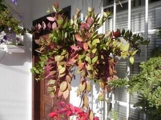 Saia do comum e aposte em plantas pendentes para renovar o ar da casa