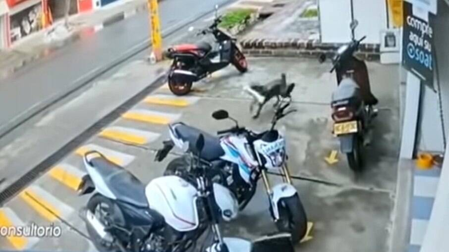 Cachorro rouba osso gigante