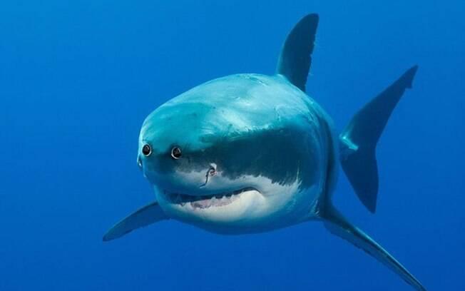 Tubarão com os olhos na frente.