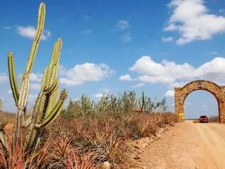Cactos e mato ressequido dominam a paisagem