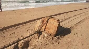 Objetos encontrados em praia eram de navio nazista