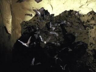 Viajantes mais aventureiros podem explorar cavernas com morcegos