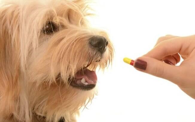 Quando o cão sente muita dor pode ser que o médico recomende anti-inflamatórios