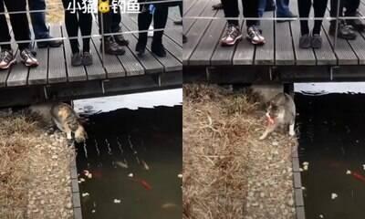 Gato pesca peixe com a boca em lago turístico e surpreende visitantes