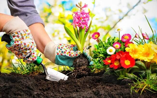 Espécies que necessitem de muita luz e pouca água são as mais indicadas para um jardim perfeito na primavera