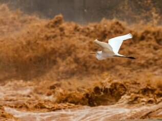 Fotógrafo capta tragédia no Rio Doce