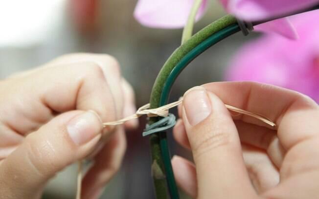 flores jardim guedala:Amarre fitas de ráfia para substituir os arames que prendem a