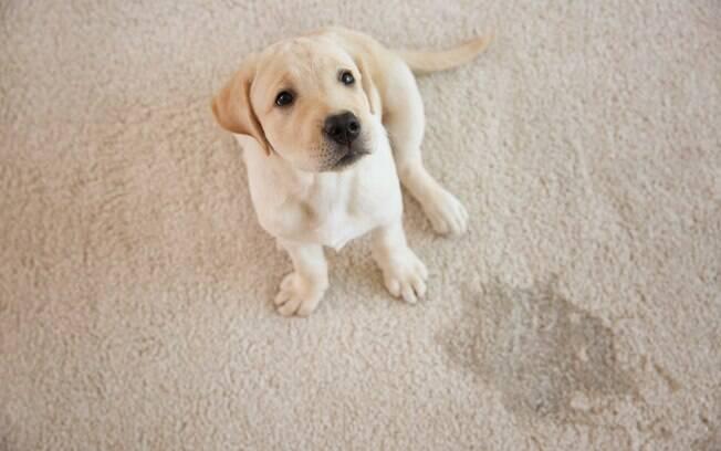 Urinar com mais frequência é o principal sintoma da cistite em cães. Dessa forma, não estranhe se o pet começar a fazer xixi em locais inapropriados