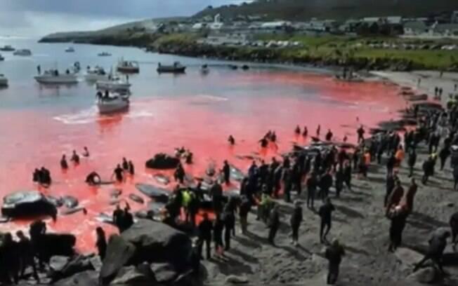 Caça de baleias nas Ilhas Faroe é prática combatida por ONGs de defesa dos animais