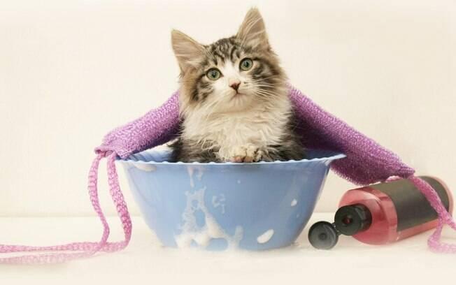 Confira alternativas para limpar o gato que não consegue se lamber