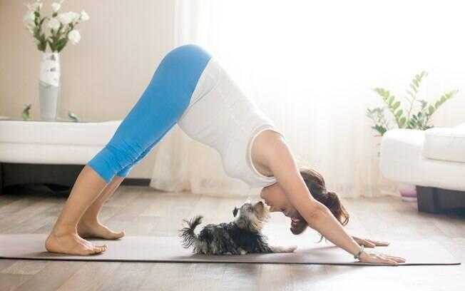 Além de relaxar, a yoga fortalece o vínculo ente dono e animal