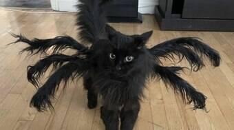 Dona transforma seu gatinho com fantasias de terror