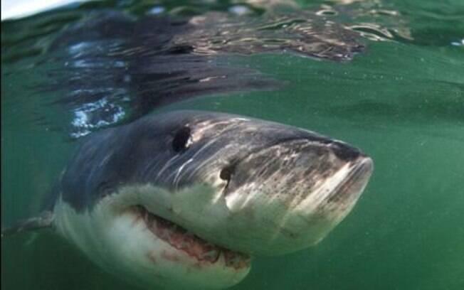 Um tubarão branco de seis metros foi flagrado por uma família durante passeio nos EUA.
